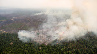 Amazon forest fires: Policy lessons for India